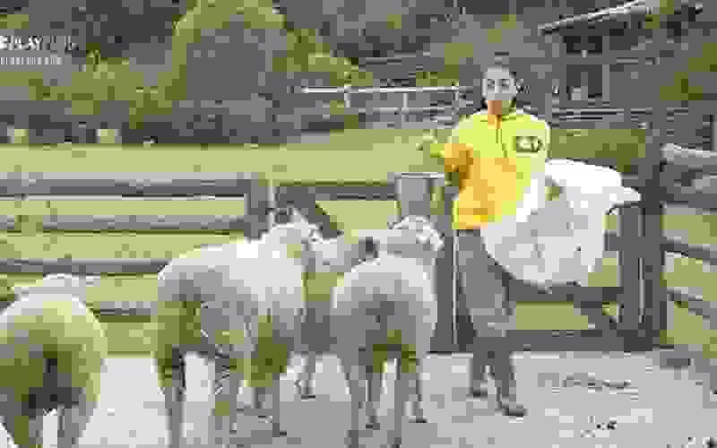 """""""Tô me sentindo a rainha das ovelhas"""", diz Mirella - A Fazenda 12"""